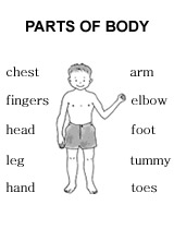 Parts Of Body Worksheet